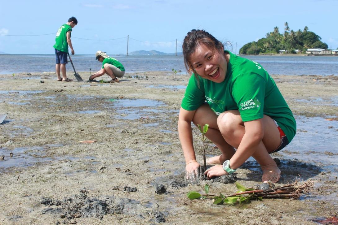 Volunteers replanting mangroves from the mangrove nursery